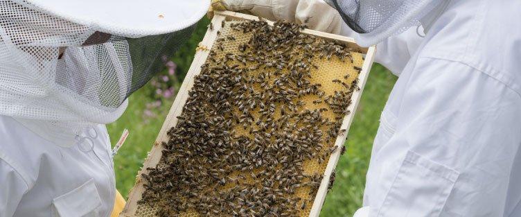Urbapi - Installation d'abeilles en Rhône Alpes