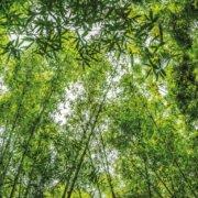 Reforestation - Urbapi