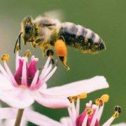 Alternatives aux pesticides - Urbapi