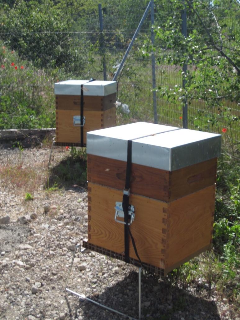 Location de ruches - Eiffage