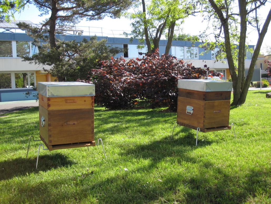 Location de ruches - Ibis Budget