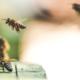 Location de ruche