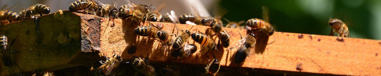 Installation abeilles