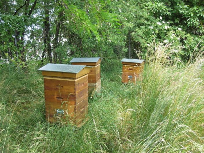 Location de ruches - UTC