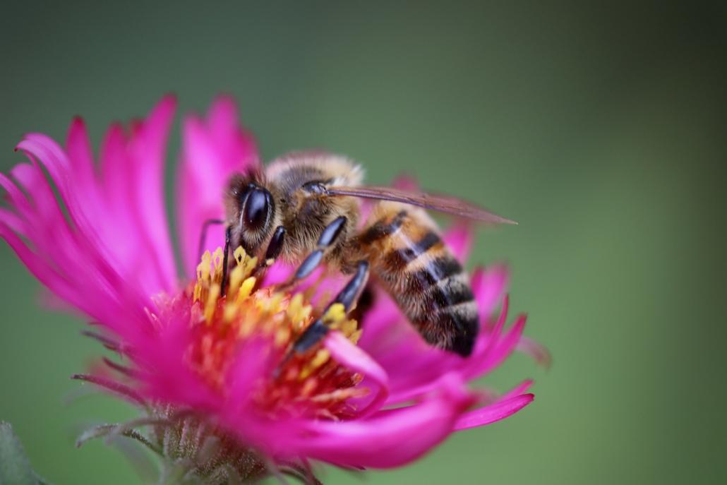 découverte des abeilles - Urbapi - installateur de ruches peuplées