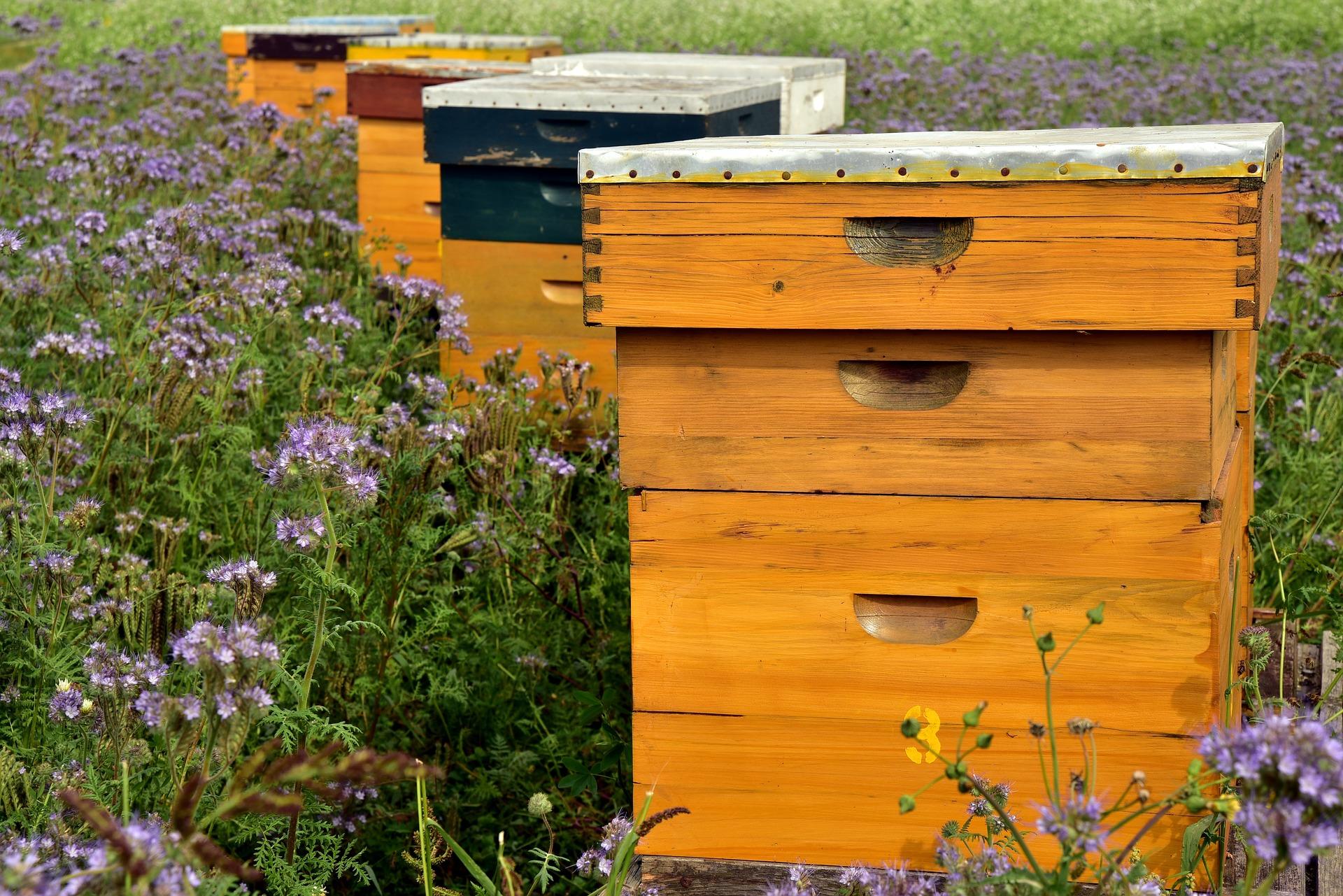 parrainage de ruche en entreprise - Urbapi