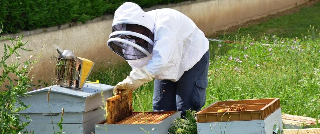 Urbapi - apiculture à Lyon