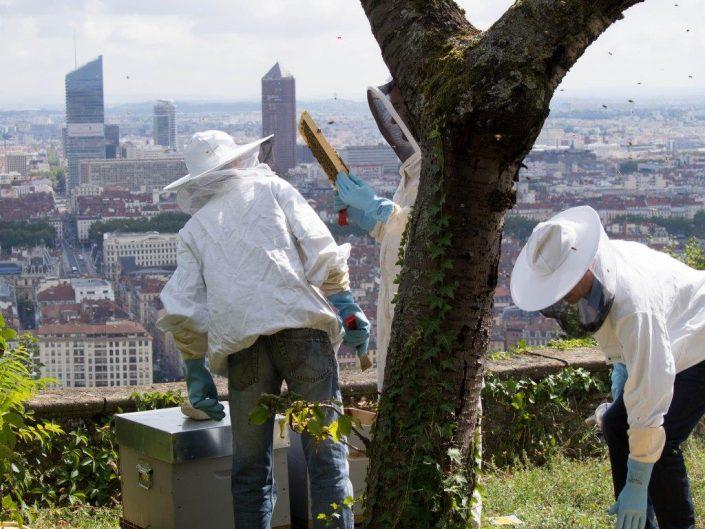Ruche en entreprise - ECAM Lyon